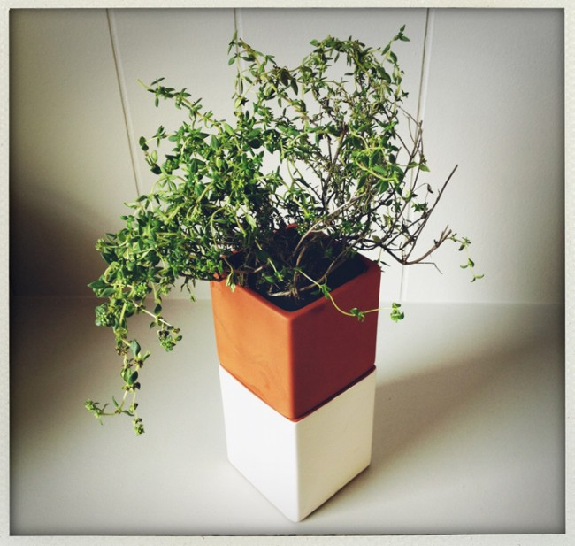 cult evergreen planter