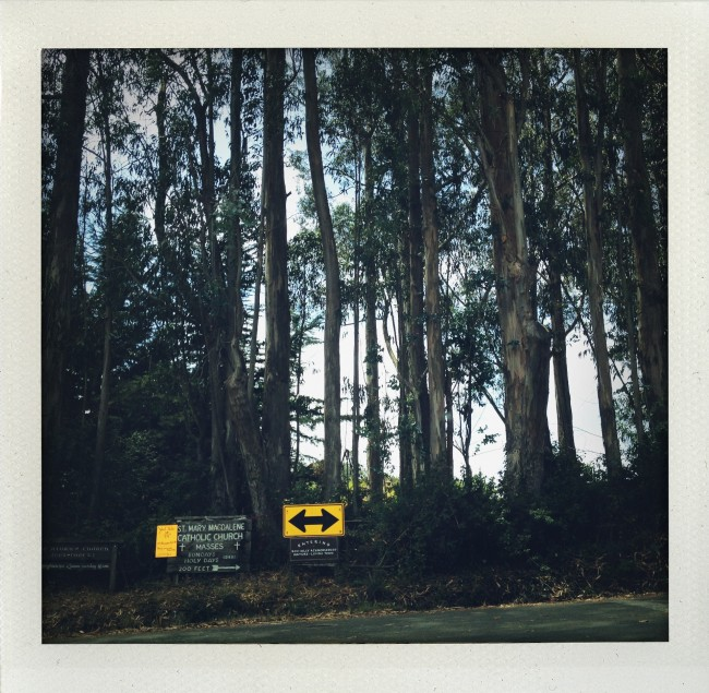 The road to Bolinas is lined with Redwoods and Eucalyptus trees. But no road signs.