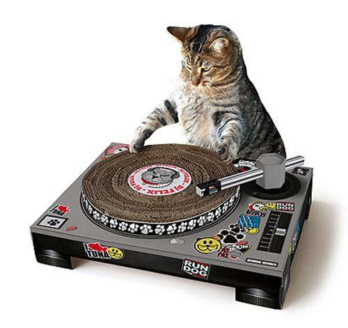 cat dj scratchpad
