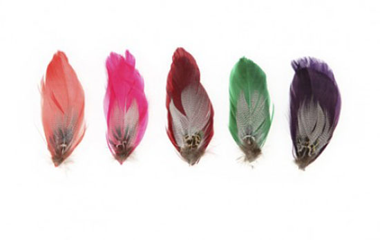 feather clips from sweet william