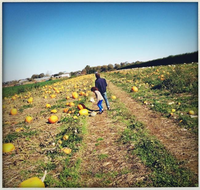 Late fall harvest